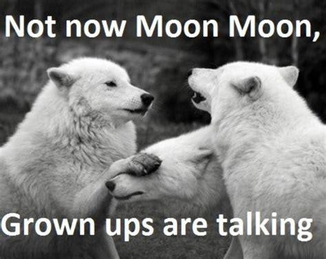 Moon Meme - guy s werewolf name is moon moon internet weighs in