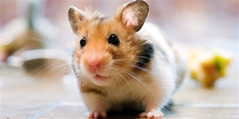 incredibly small pets     blogletcom