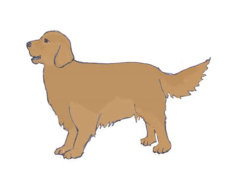 doodle dawg sketch draw color how to draw a