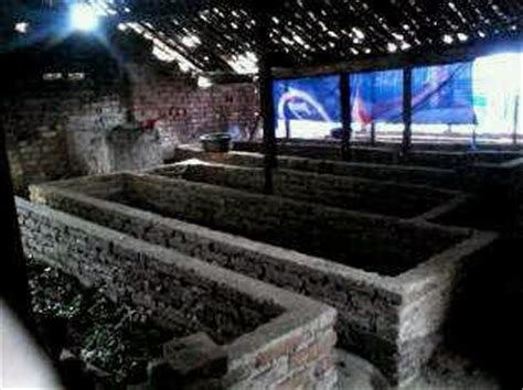 Grosir Cacing Di Bekasi exsportir cacing lumbricus rubellus budidaya ternak