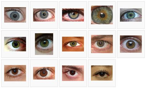 types of eye colors green eye color chart eye color chart different