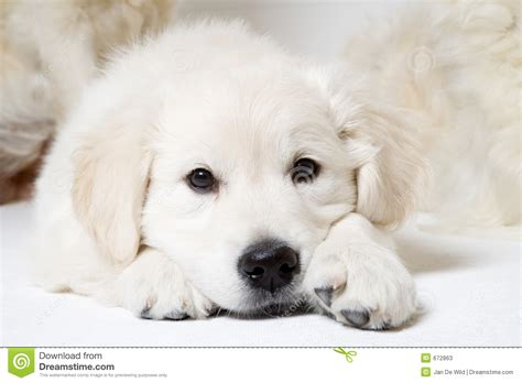 sweet puppy sweet puppy stock photos image 672863