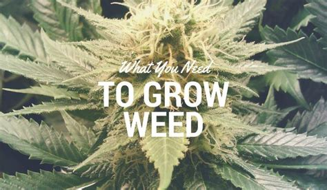 cannabis all that you wanted to and may not known about marijuana books 17 best images about growing indoors 101 on