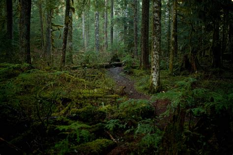 The Woods washington woods loughridge