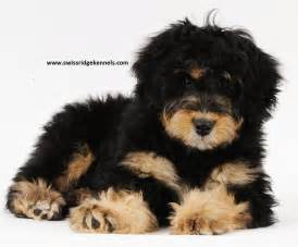 See they do exist i will have one this is it this is the dog