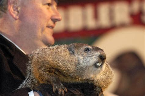 groundhog day weather report groundhog day is thursday will phil see his shadow