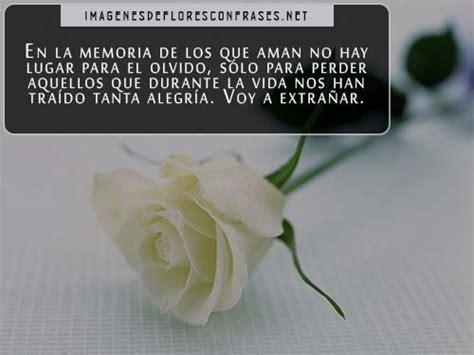 imagenes de luto rosas blancas rosa blanca de luto