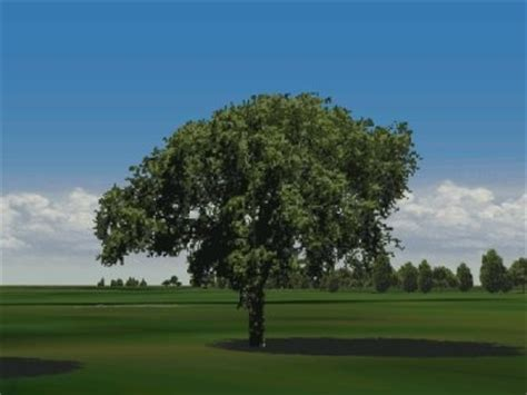 elm tree symbolism july s trees are elm and cypress elm tree symbolism