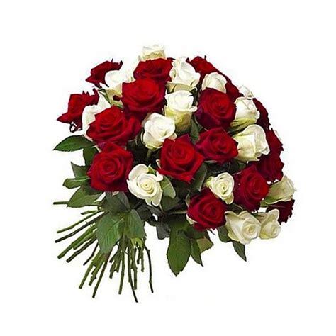 imagenes rosas blancas y rojas fotos de rosas rojas y blancas imagui
