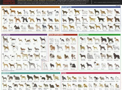 breed list chicken breed chart search 4h youth program