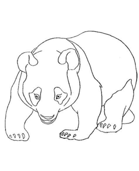 free panda printable animal coloring pages
