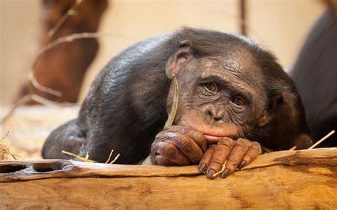 monkey with sad monkey