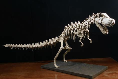 origami skeleton mind blowing origami dinosaur skeletons origami me