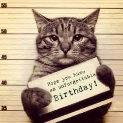 101 happy birthday cat grumpy images meme and pictures