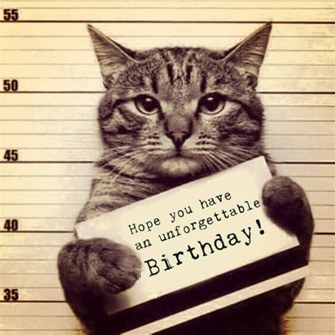 Cat Happy Birthday Meme - 100 most funny happy birthday memes for 2017 birthday memes