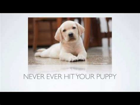 puppy biting stage stop petsmart tips to stop puppies biting puppys for sale