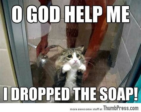 Top Ten Best Memes - 25 of the best cat memes we could find blogger4zero com