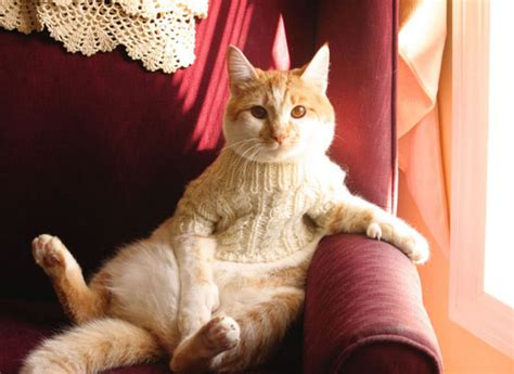 Sweater Cat 2 cats in sweaters things