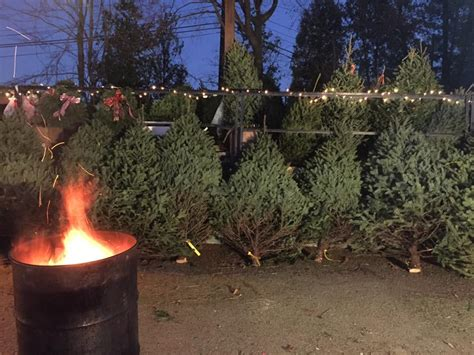 hooville christmas tree for sale tree sale cj construction junction