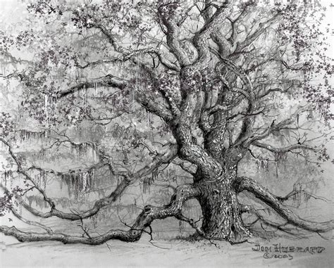 oak tree drawing live oak drawing by jim hubbard