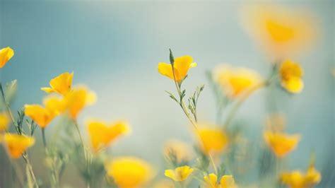 desktop wallpaper hd yellow little yellow flowers hd wallpaper wallpaperfx