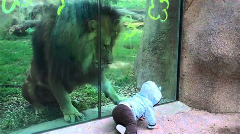 attacks baby trying to attack baby at zoo