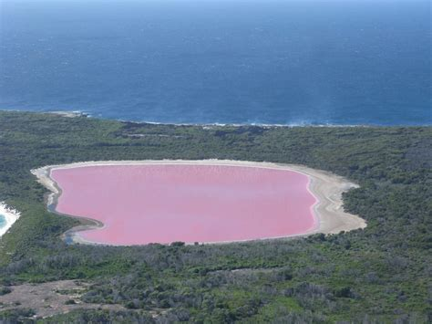 pink lake australia lake hillier the pink lake in australia