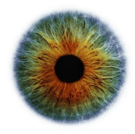 what color is iris morning makeup call what is your eye color look closer