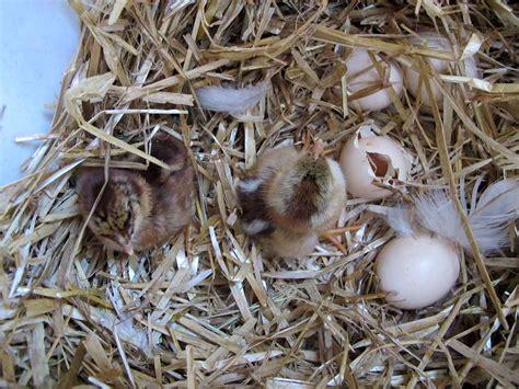wann sind eier abgelaufen entwicklung eines k 252 ken im ei