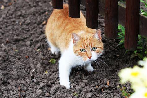 katzen aus garten fernhalten katzen vertreiben 6 wirksame methoden aus dem garten