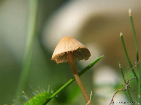 Typische Pilze Im Garten by Monatscollage September Meriseimorion