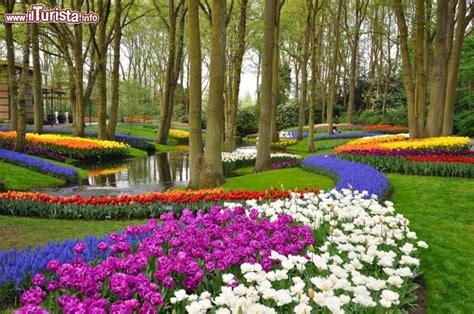 parco fiori olanda uno spettacolo di alberi e prati in fiore al foto