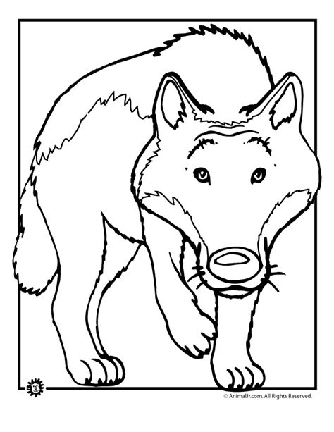 cartoon wolf coloring page animal jr