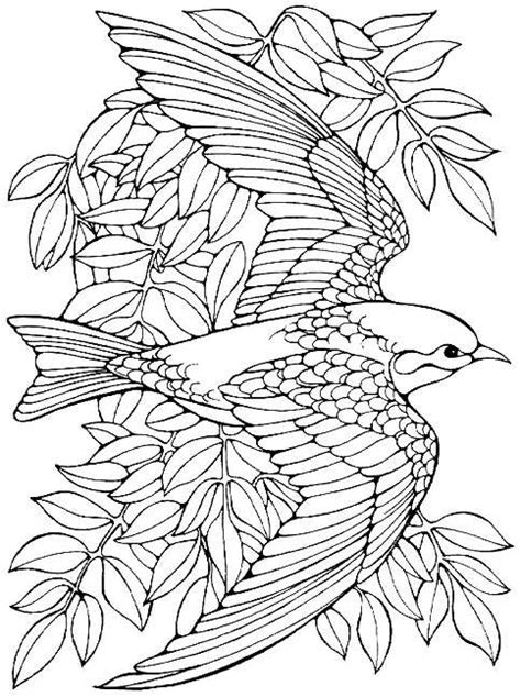 printable advanced bird coloring pages  adults