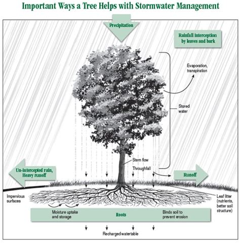 tree water solution 49 best images about slope drainage on drain