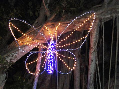 lights in bloom at marie selby botanical gardens
