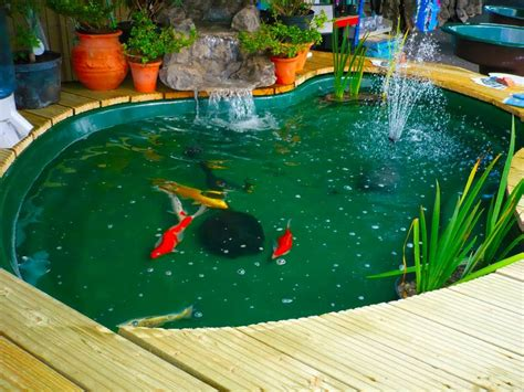 Lu Uv Untuk Kolam Ikan desain membuat kolam ikan minimalis gambar rumah idaman