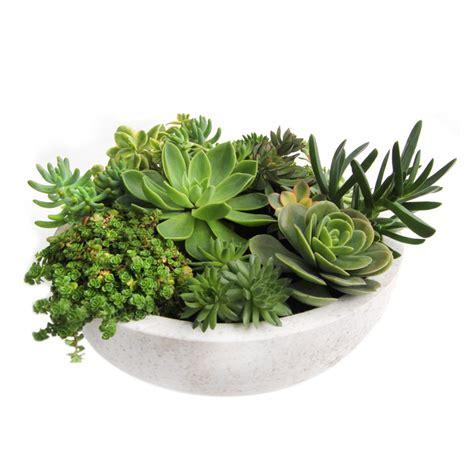 large succulent planter large succulent bowl quot walt grace quot in white or black terrazzo living gift