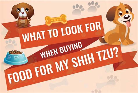 buying a shih tzu puppy what to look for what to look for when buying food for a shih tzu infographic
