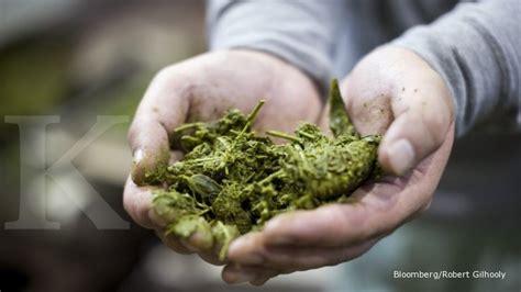Pabrik Teh Pucuk rni resmikan pabrik pengolahan teh hijau
