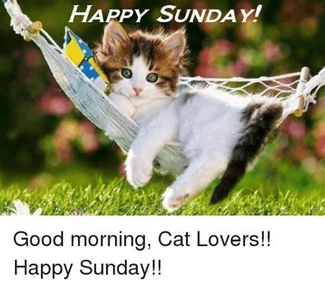 A Cat On A Sunday by Happy Sunday Morning Cat Happy Sunday