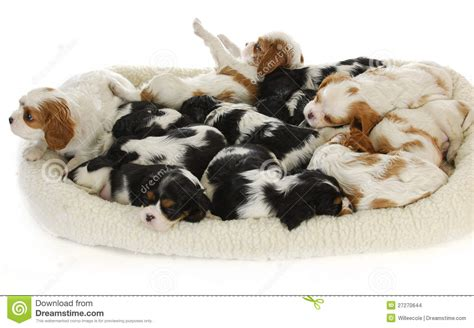 litter of puppies litter of puppies stock images image 27270644