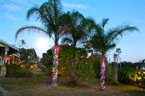 lights on a palm tree christmas lights in palm trees phillip s natural world