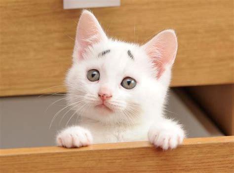Cute Cat Meme Generator - image gallery quizzical cat