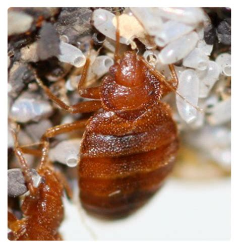 pest control for bed bugs pest control photos homeone 174 page 2