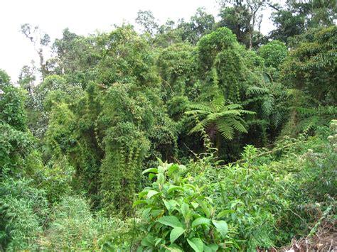 Amazonas Regenwald Pflanzen by Rainforest Plants