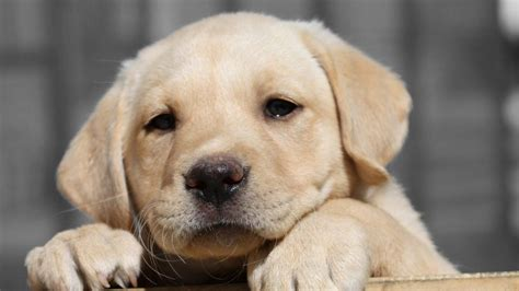 places to buy puppies the best place to find a the fiscal times