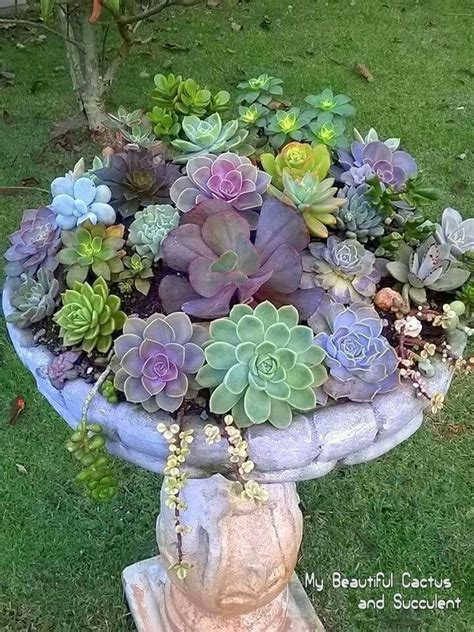 Garden Arrangement Ideas Best 20 Succulents Garden Ideas On Succulents Succulent Landscaping And Indoor