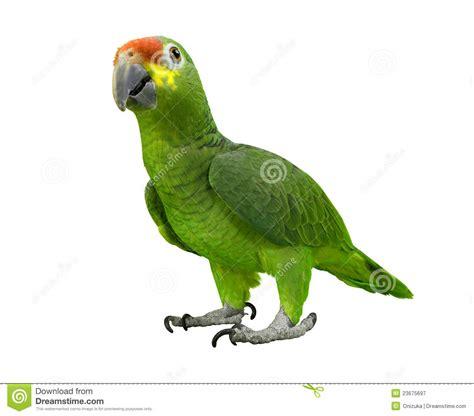imagenes de loritos verdes loro verde fotograf 237 a de archivo libre de regal 237 as