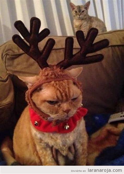 imagenes graciosas de animales en navidad fotos graciosas gatos la rana roja f 250 tbol y humor